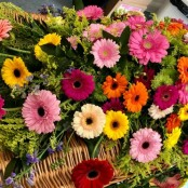 Mixed Gerbera Coffin Spray